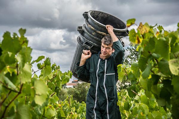 Stéphane Orieux quel.vin